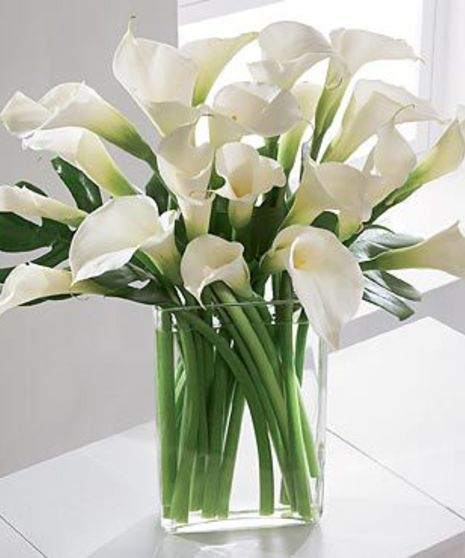 Lux Calla Lilies