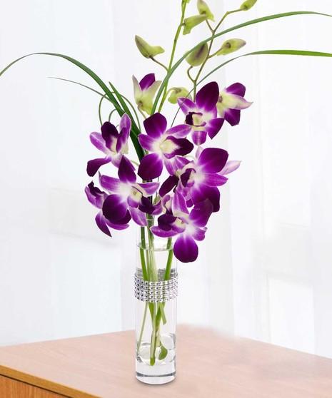Best Value Orchids